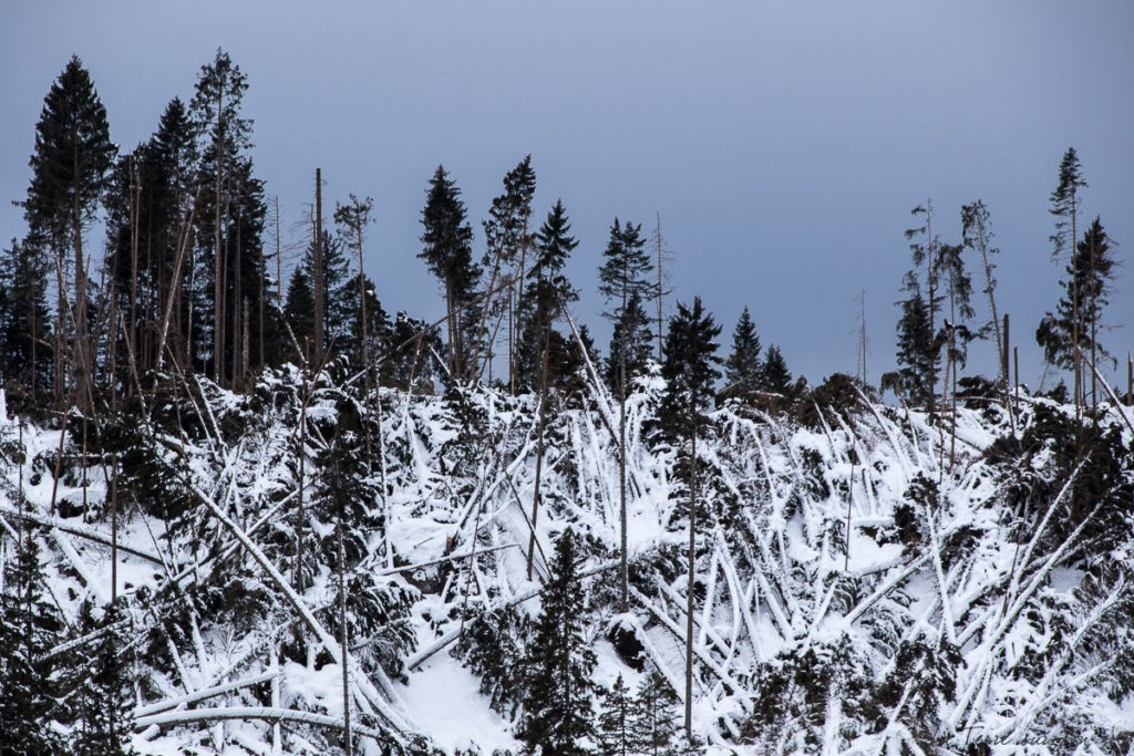dolomites hiver paysage lac carezza