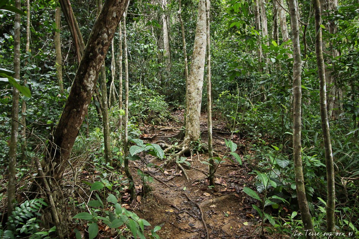 cascade de bois bananes racine chemin