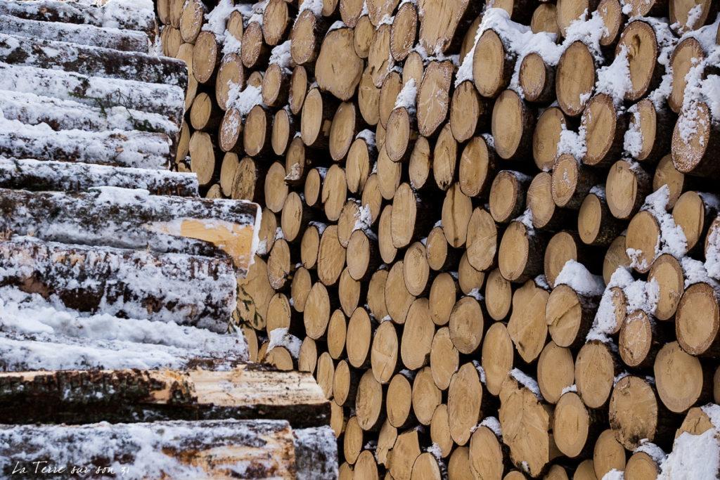 tronc arbre lac carezza