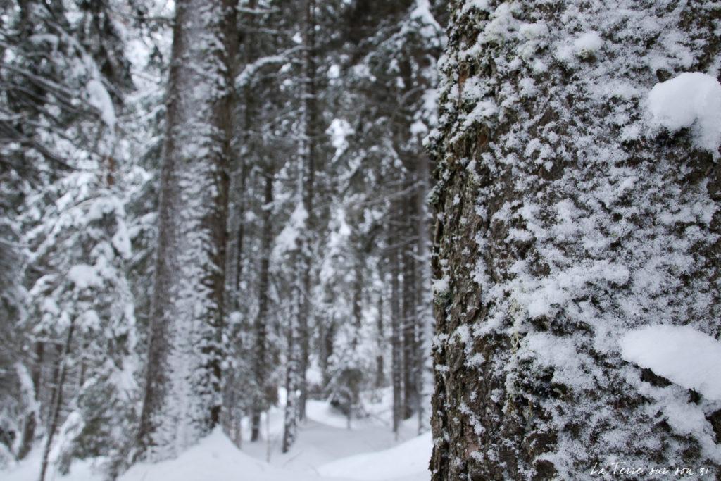 troncs arbre neige
