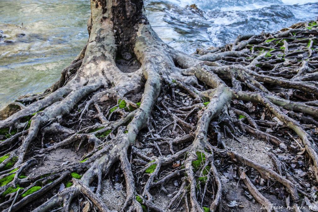 arbre sillans