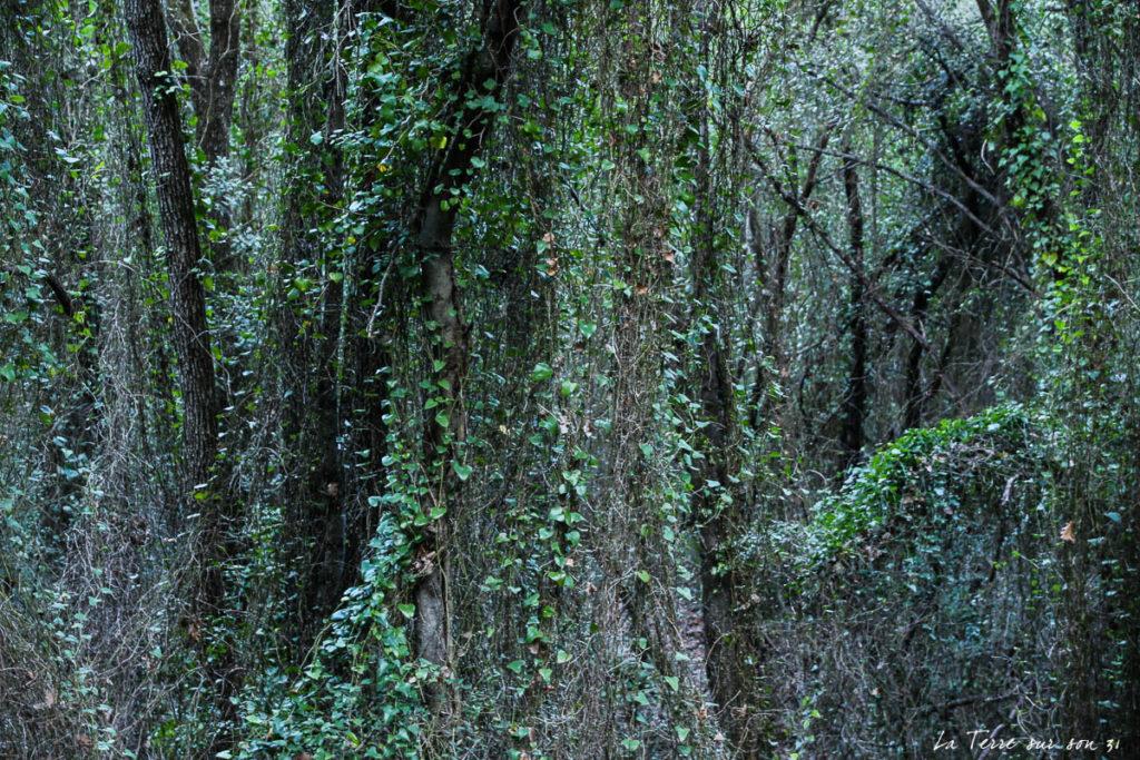 forêt salernes
