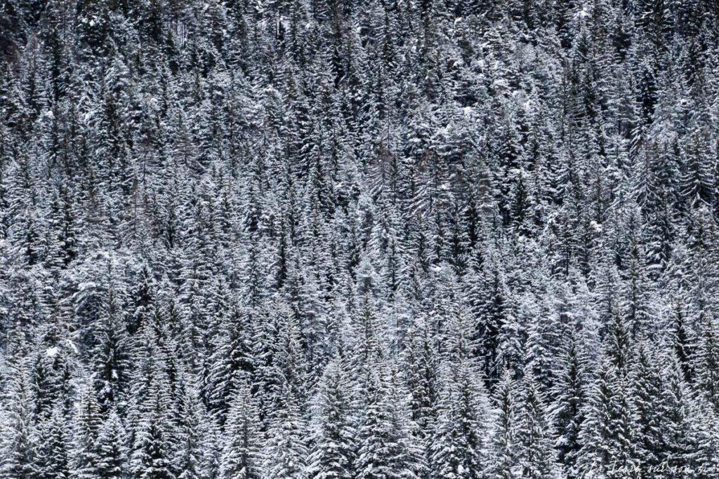 forêt sapins lac dobbiaco