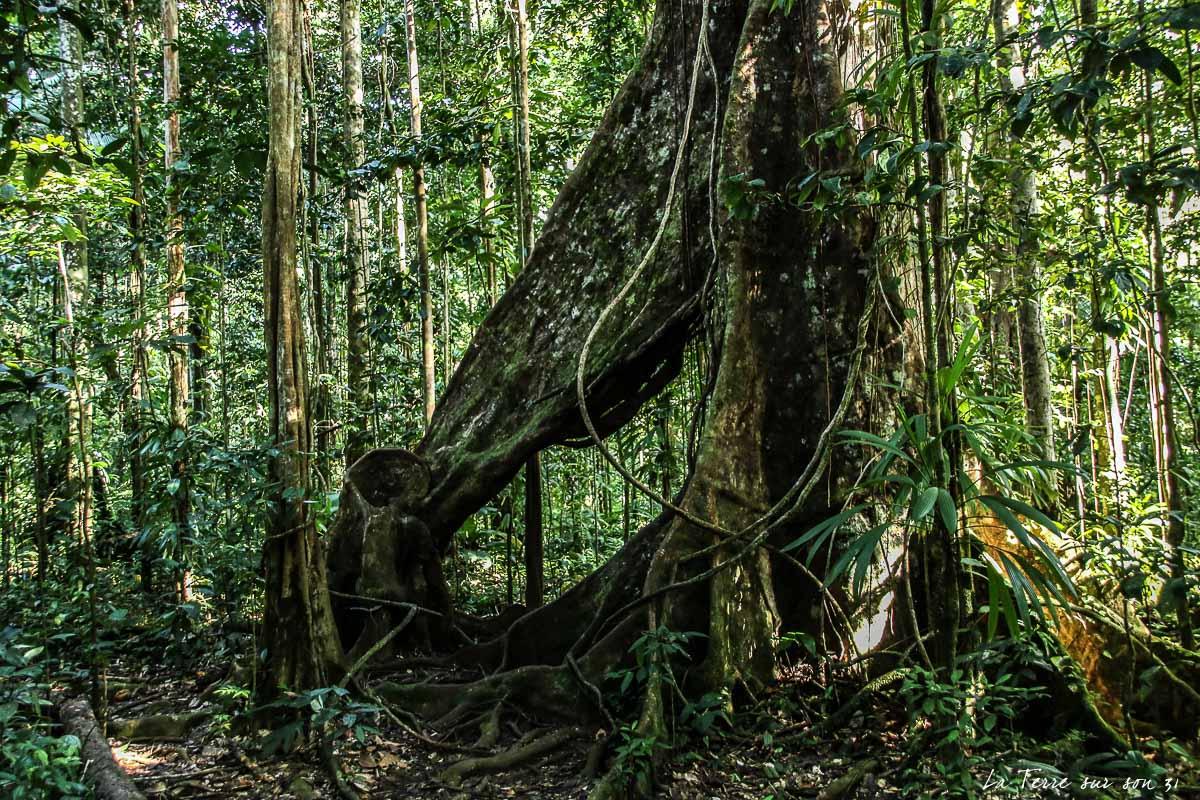 forêt tropicale guadeloupe rando rivière quiock
