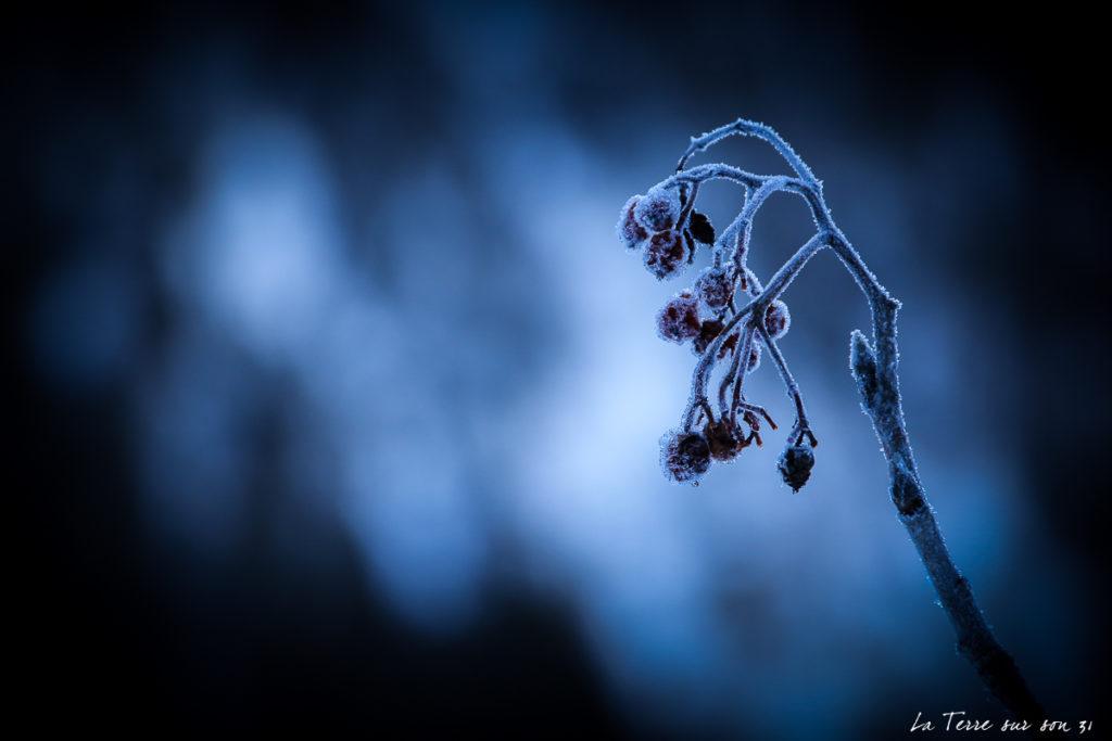 lac dobbiaco hiver fleur