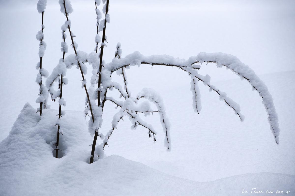 neige lac dobbiaco