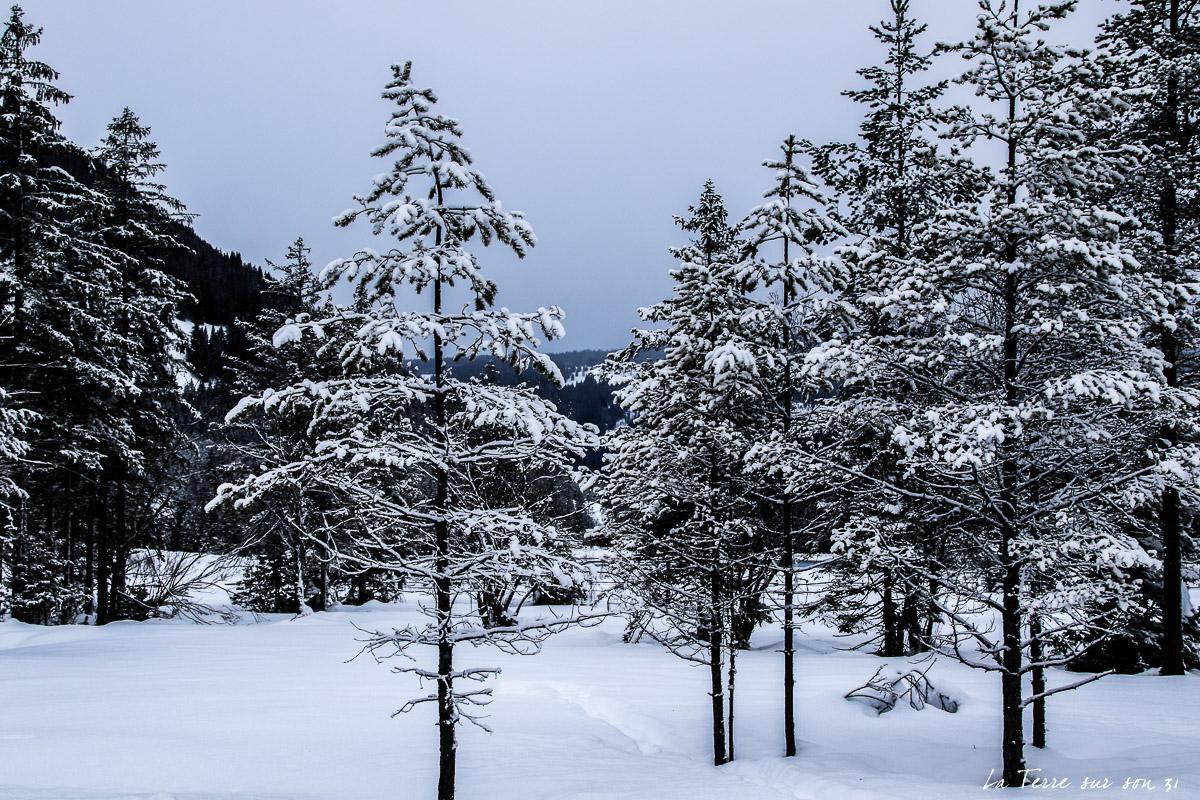 paysage lac dobbiaco hiver