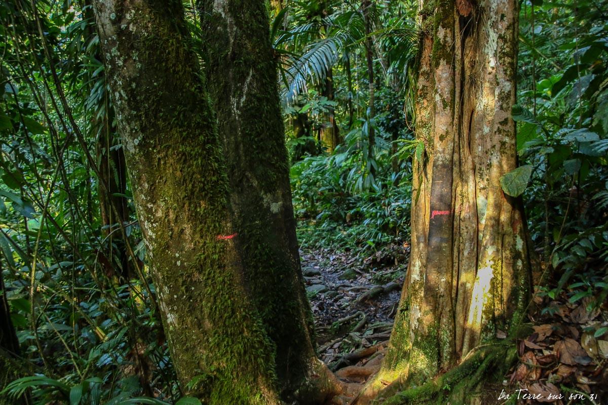 rando forêt tropicale guadeloupe