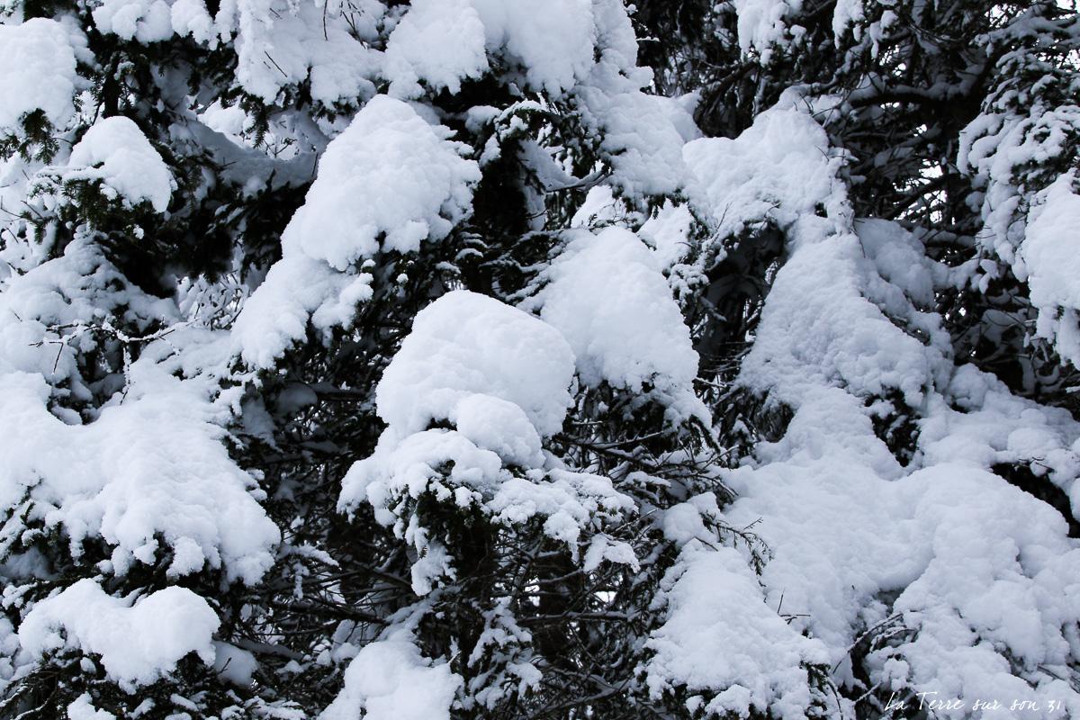 sapin neige dolomites