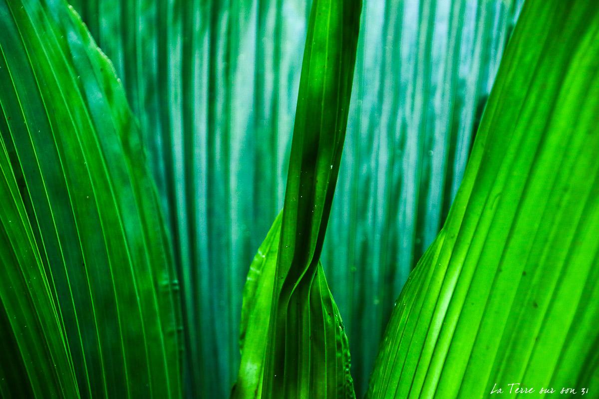 végétation guadeloupe