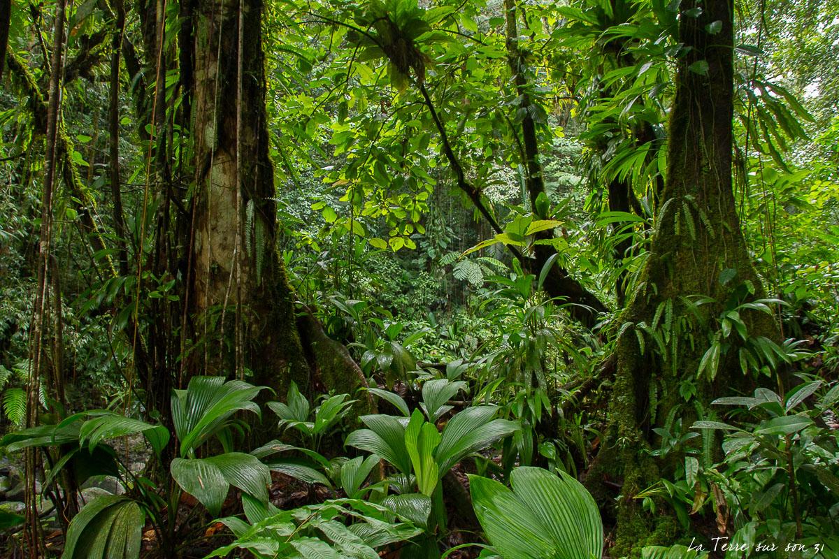 végétation luxuriante guadeloupe