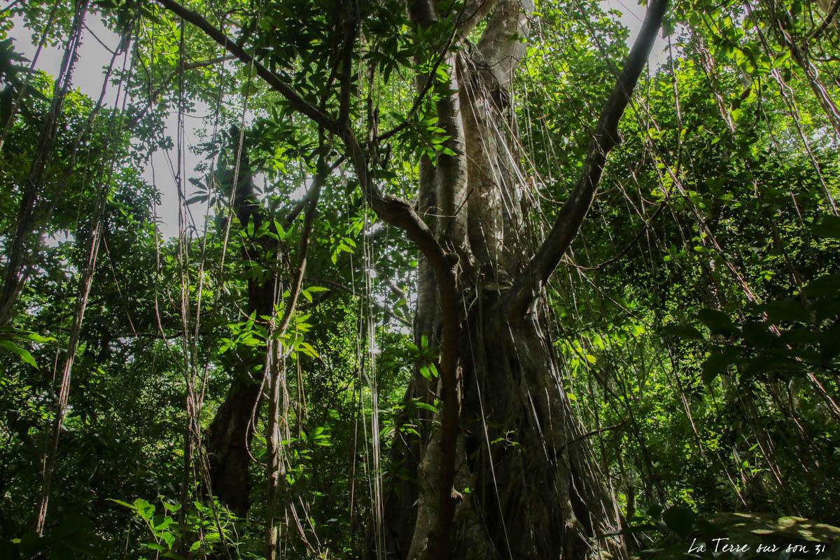 arbres lianes rivière caillou