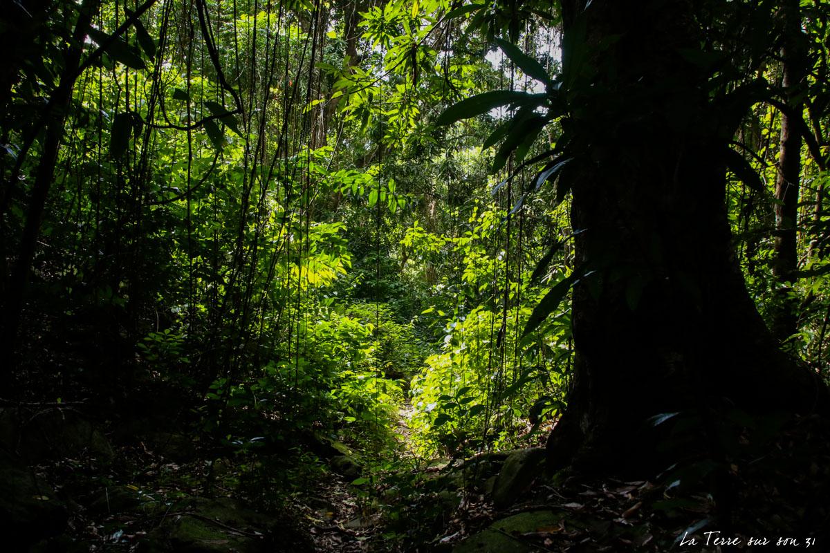 lumière forêt rivière caillou