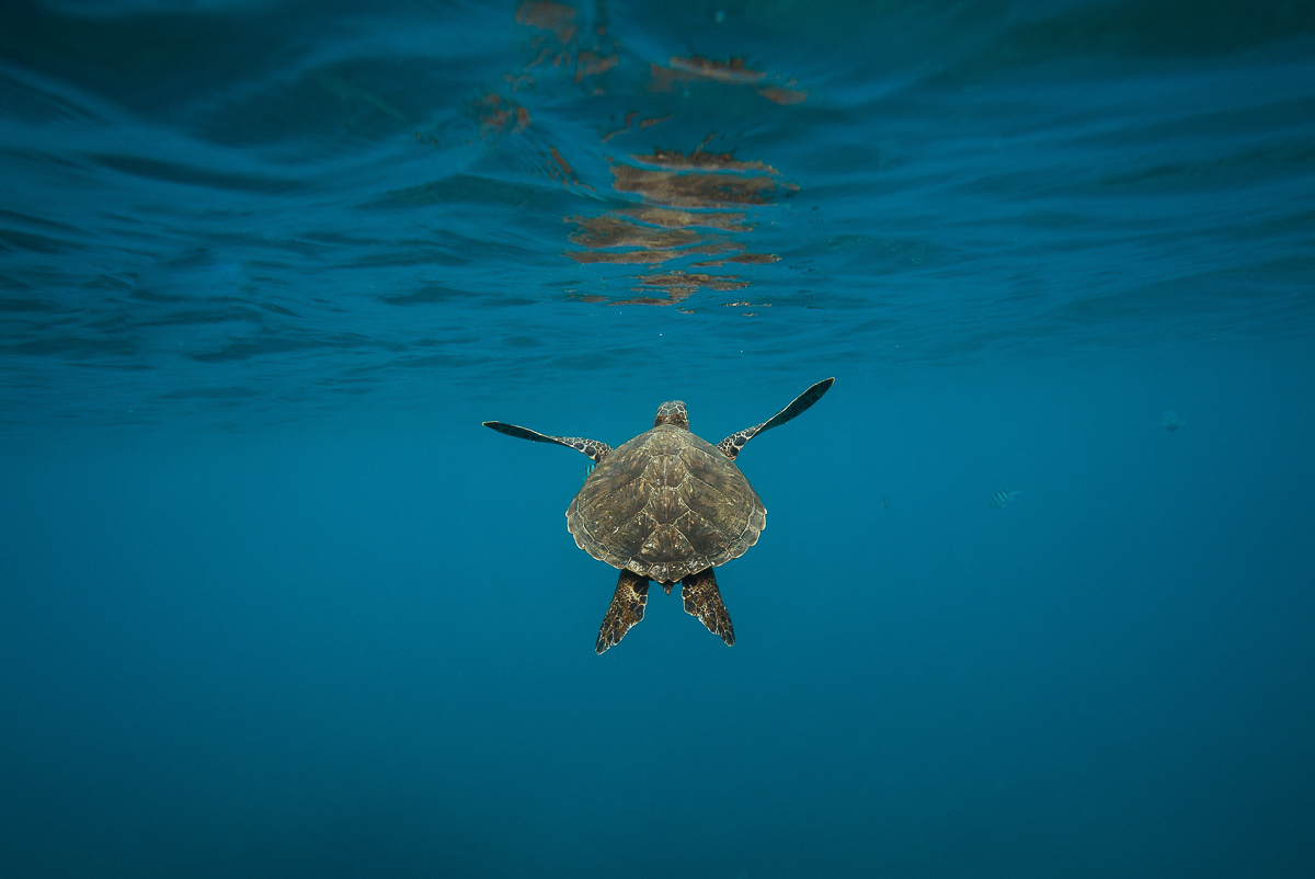 ou voir tortues guadeloupe