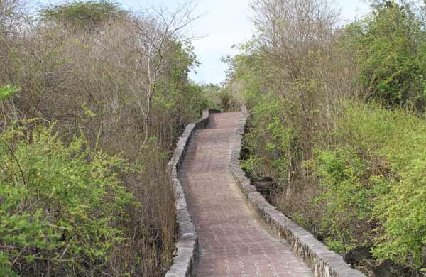 sentier accès tortuga bay galapagos