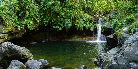 bassin paradise guadeloupe