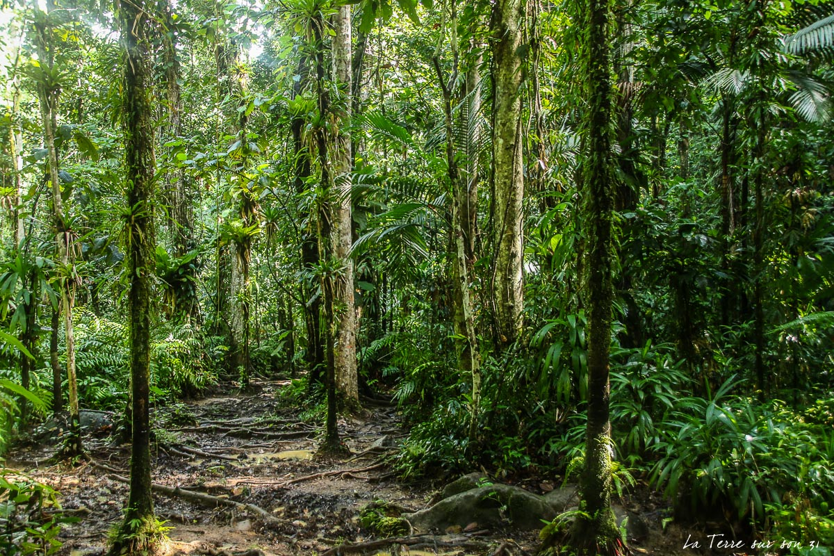 forêt tropicale guadeloupe